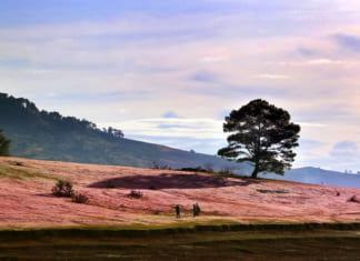 Suối vàng – cây thông cô đơn