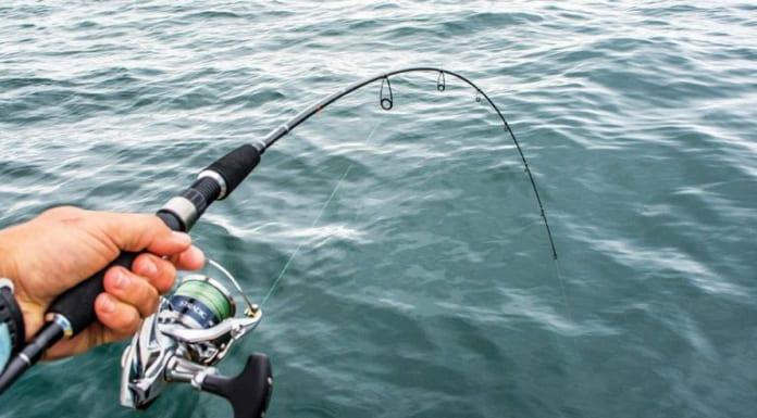 Kinh nghiệm chọn cần câu cá