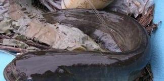 Chọn cần câu cá nheo thích hợp nhất